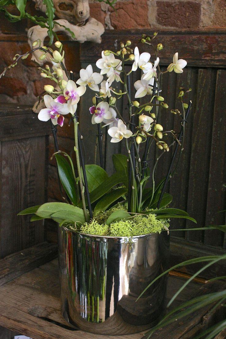 52 Best Miniature Orchids Amp Terrariums Images On Pinterest Orchid Terrarium Gardening And Plants