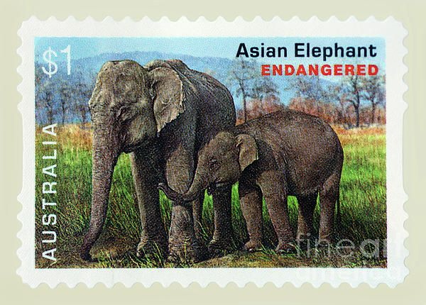 My #photograph of a real #Australian $1 Postage Stamp of the Asian Elephant, an endangered species. #Postage #Stamp #Asian #Elephant by #Kaye_Menner Photography Quality Prints Cards Products with a money-back guarantee at: https://kaye-menner.pixels.com/featured/postage-stamp-asian-elephant-by-kaye-menner-kaye-menner.html
