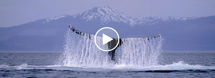 Alaskan Cruise Vacations - Holland America Line