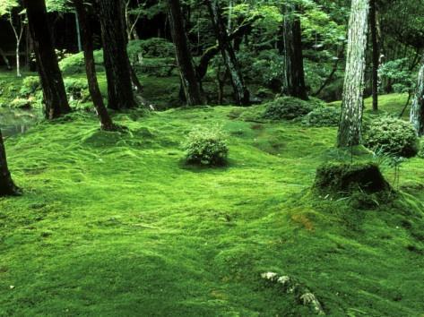 Moss Temple Kyoto Japan