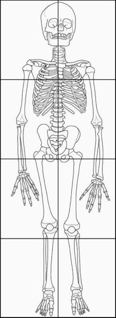 """Juvenile human skeleton standing 43"""" tall"""