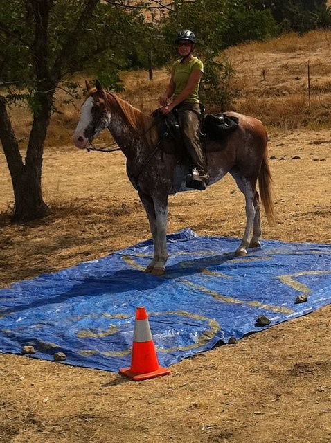 120 Best Images About Horse Trail Obstacle Course On