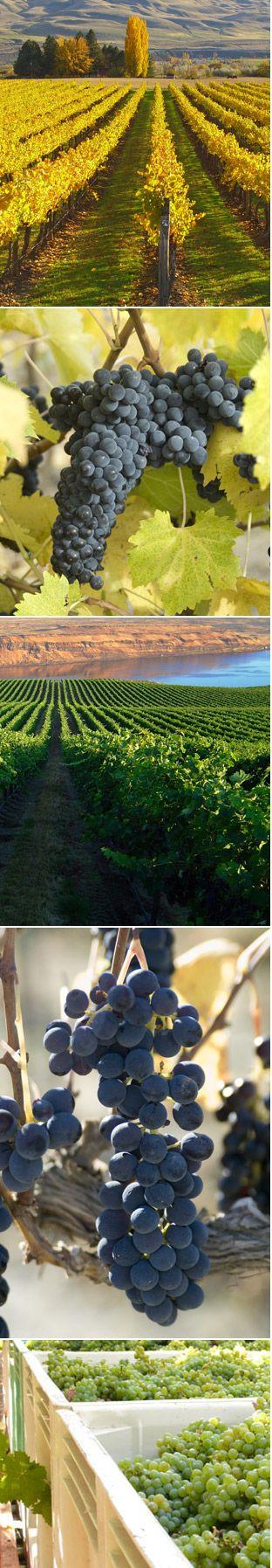 One of my favorite Washington wineries, Maison Bleue