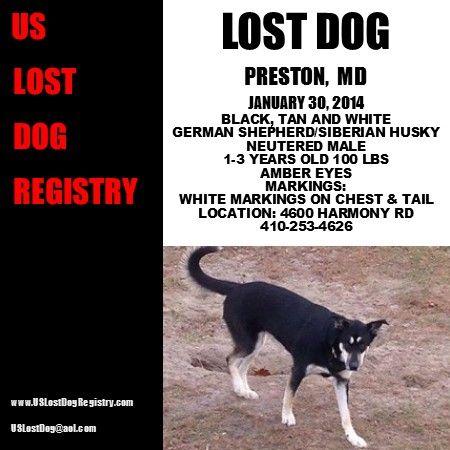 Best Maryland  Us Lost Dog Registry Images On