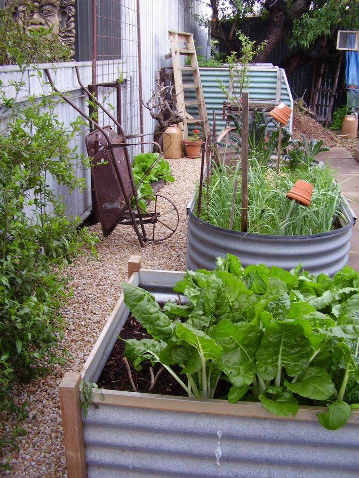 24 best images about galvanized containers on pinterest gardens the old and sled - Galvanized containers for gardening ...