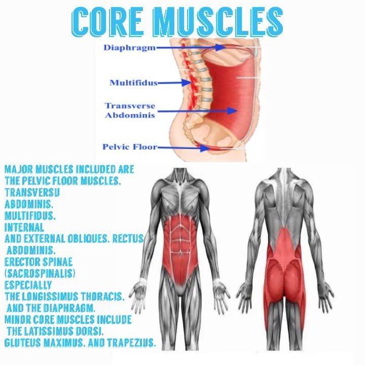 ماهو الكور أو منطقة الوسط او لب الجسم هي عضلات البطن وأسفل الظهر والحوض والعضلات الكبيرة من كل جانب من العمود الف Major Muscles Core Muscles Latissimus Dorsi