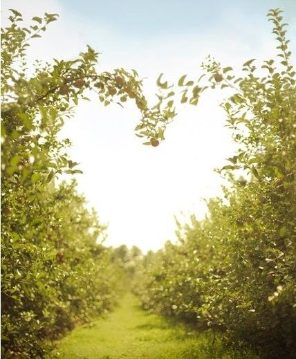 I love nature: Heart Branches, Heart Archway, Heart Art, Heart In Natural, Heart Paths, Earth Day, Love In Natural, Green Heart, Natural Heart