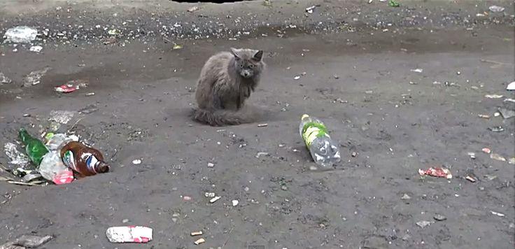 #poverty #siberia #vice #trash #ghetto #cat #meow  Rickard Nilsson