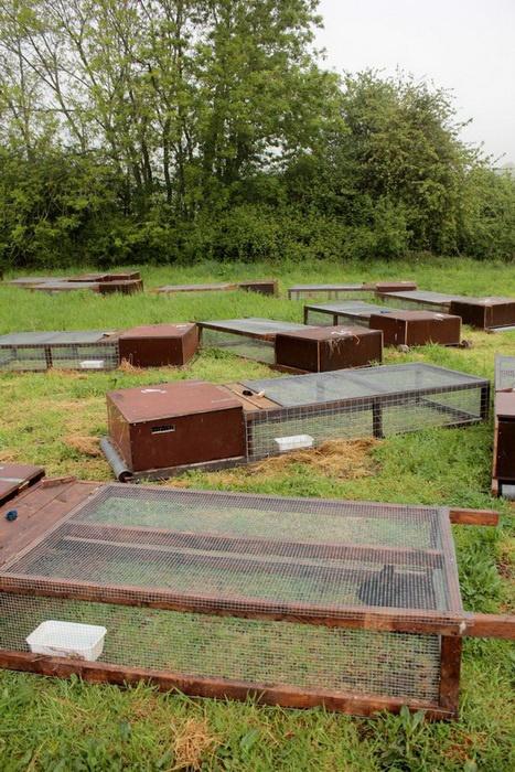 17 meilleures id es propos de clapiers sur pinterest for Construire une cabane a lapin exterieur