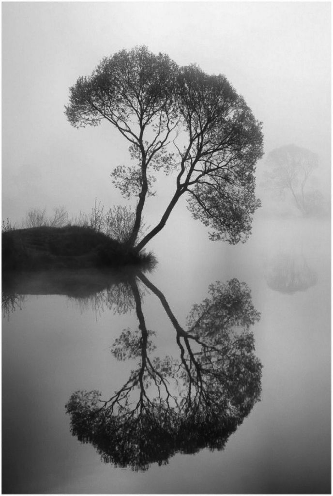 I HAVE BEEN HERE...NOT THIS LAKE..NOT THIS TREE, BUT I HAVE BEEN LUCKY ENOUGH TO EXPERIENCE THIS VERY IMAGE.  THIS TIME OF THE MORNING THE BIRDS HAVE JUST STARTED SINGING.  ONE BY ONE SMALL ANIMALS COME FOR A MORNING DRINK AND THE SUN STARTS TO BREAK THROUGH AND THE MIST BEGINS TO EVAPORATE AS THE HEART OF THE DAY MAKES IT'S START.