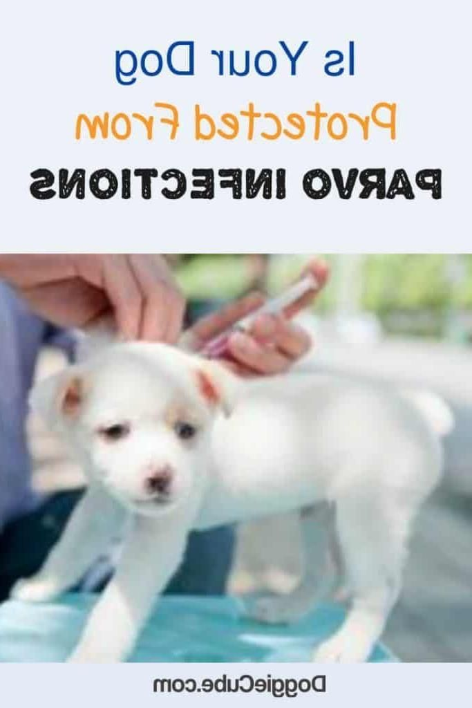 Dog Training Name With A Mortality Rate Of About 90 If Not Treated It Is Important That Dog Owners Take Parvo Seriously Parvo In 2020 Dog Accessories Dogs Dog Owners