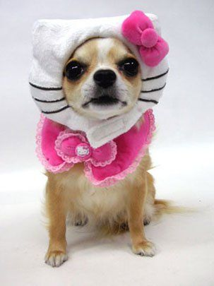 halloween small dog costume ideas the hydrant blog - Halloween Costume For Small Dogs