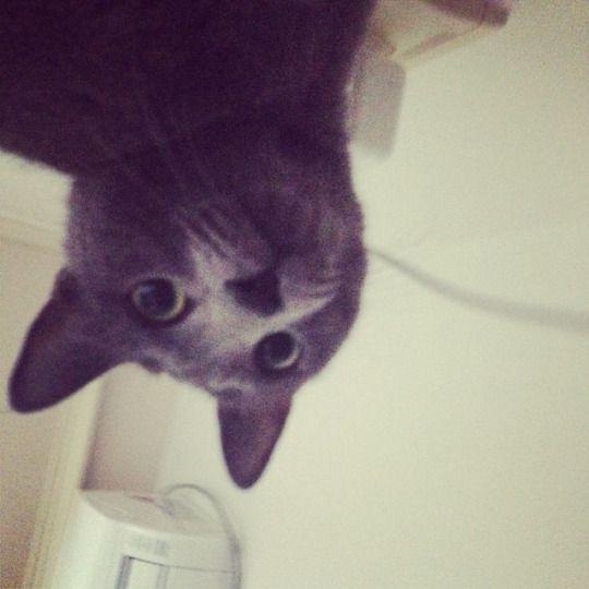 #paul #cat @meanieB