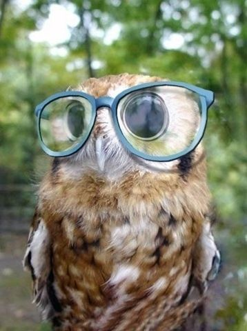 Owl wearing glasses! Why is this the cutest thing that I've ever seen in my life?!