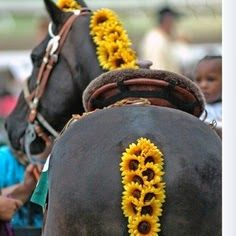 Horse Country Chic: Preakness Picks