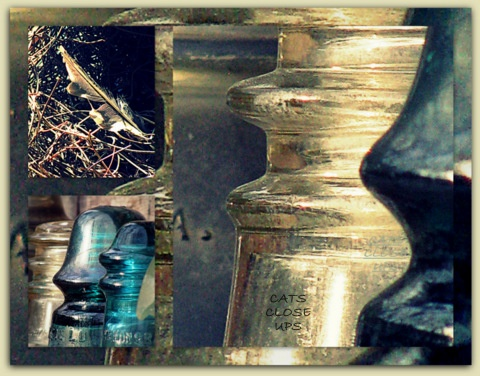 Old Insulators <3   Photo By: CatsCloseUps