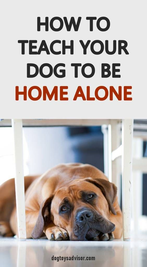 Learning To Be Left Alone Is An Important Part Of Your Dog S