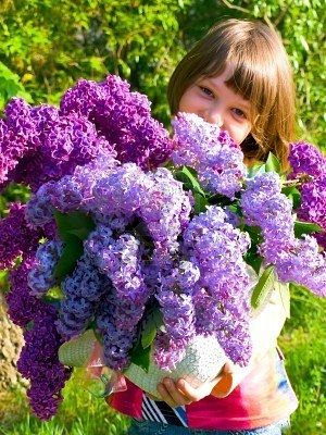 ♥Lilacs for Shell~Kimberly and Vik♥~from kk