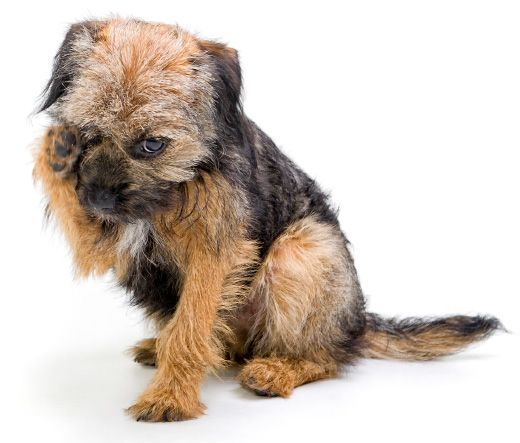 How to diagnose pet allergies