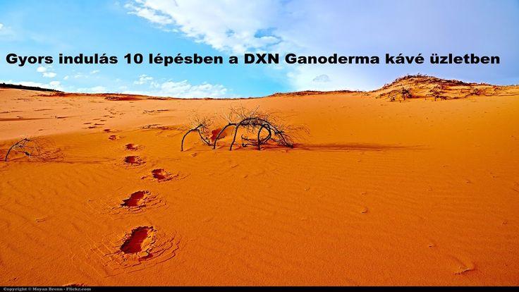 10 lépés a hatékony, gyors startért a DXN Ganoderma kávé üzletben