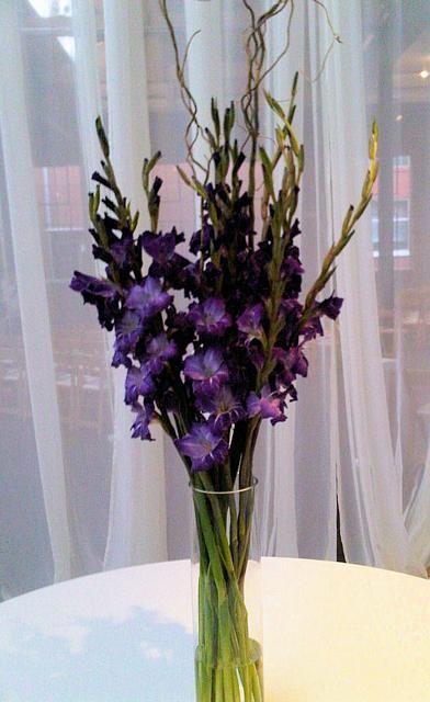 Best gladiolus bouquet ideas on pinterest