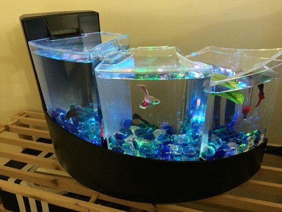 Les 25 meilleures id es de la cat gorie aquariums for Poisson decoration aquarium