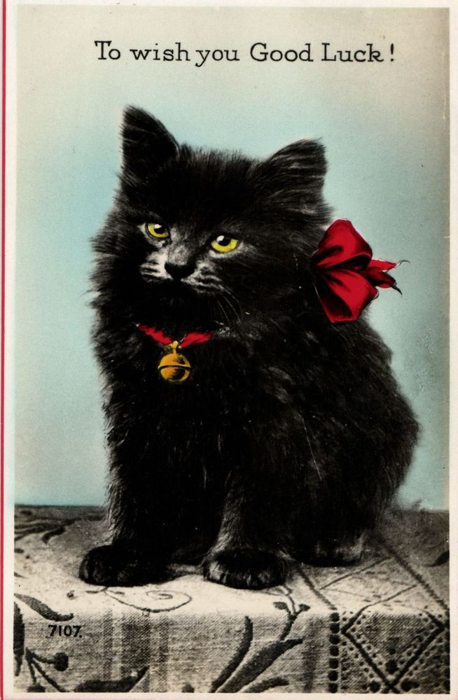 Black Cat To Wish You Good Luck Valentine Artist Postcard Lucky Black Cats Cats Vintage