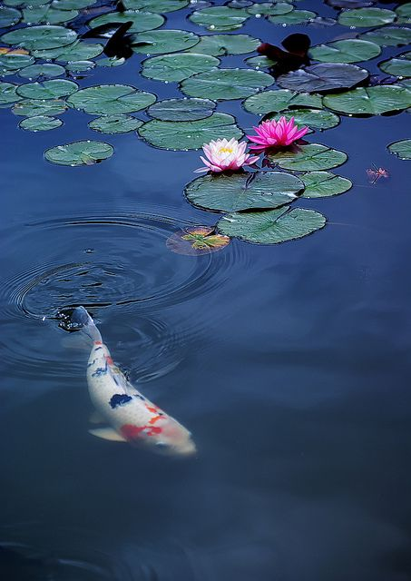 Best 25 Water Lilies Painting Ideas On Pinterest