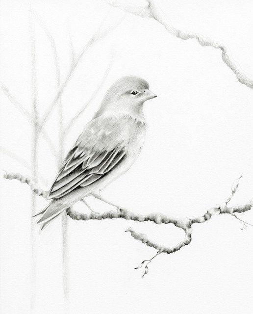 Custom Pencil Drawing Woodland Bird Drawing Custom Art Black and White. $125.00, via Etsy.