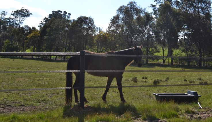 Happy, safe horse with StockGuard Electric Fencing - great visual barrier with 40mm electric fence tape in brown - www.stockguard.com.au
