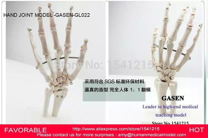 HAND JOINT SKELETON MODEL HUMAN SKELETON MODEL VOLA PALM SKELETON MODEL,ARTICULATED HUMAN SKELETON HAND JOINT MODEL-GASEN-GL022