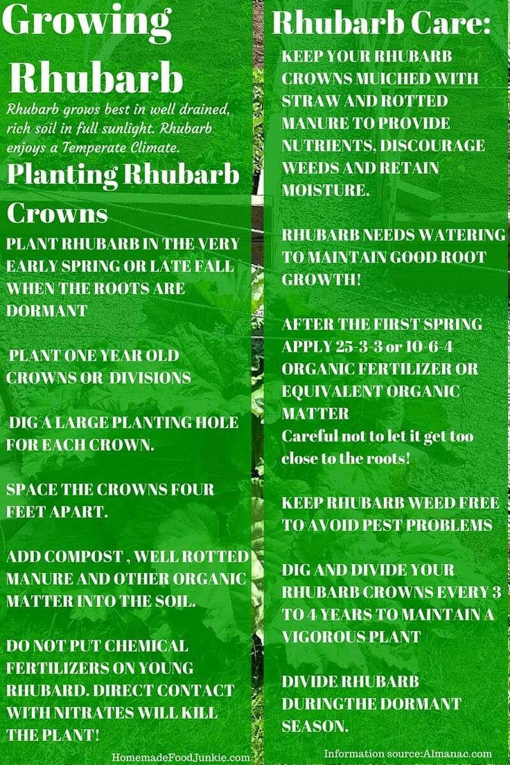How to plant rhubarb in the fall - Growing Rhubarb In Your Garden You Might Also Enjoy Growing Rhubarb In