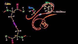 animacion sobre plegamiento de proteinas - YouTube