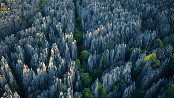 Stone forest Madagascar's Tsingy de Bemaraha National Park, situated in the Melaky region on the country's west coast, is home to some of the world's most diverse wildlife. On an African island famous for its biodiversity (90% of the species in Madagascar are found nowhere else on Earth), a kind of bio-fortress that is nearly impenetrable thanks to the massive limestone formation that runs through it. (Stephen Alvarez/National Geographic Stock)