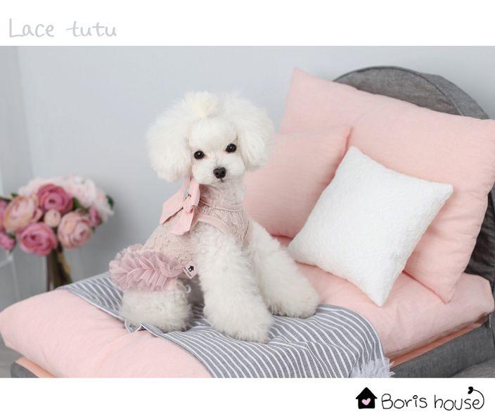 Robe Lace Tutu Rose Boris House www.sweetiedog.com #poodle #dogdress #borishouse #tutu #bow #dog #chien #dogclothes