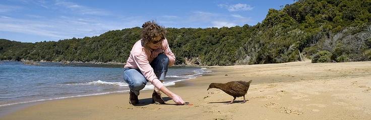 Visit Ulva Island, a renowned wildlife sanctuary.