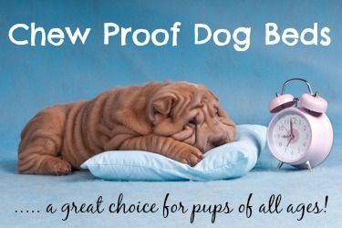 Chewproof dog beds are durable, easy to keep clean and great value for money.  See some of the best choices on the market today.