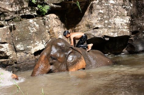 Elephant treks in the Cambodian mountains