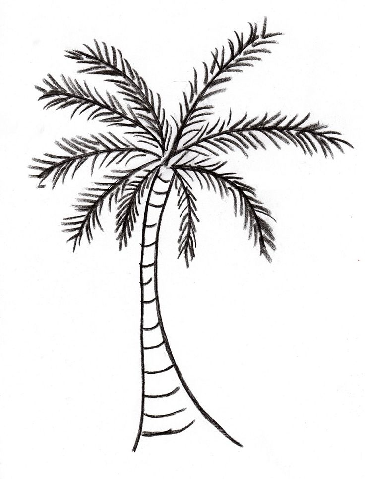 25 best ideas about palm tree drawing on pinterest palm for Best tree drawing