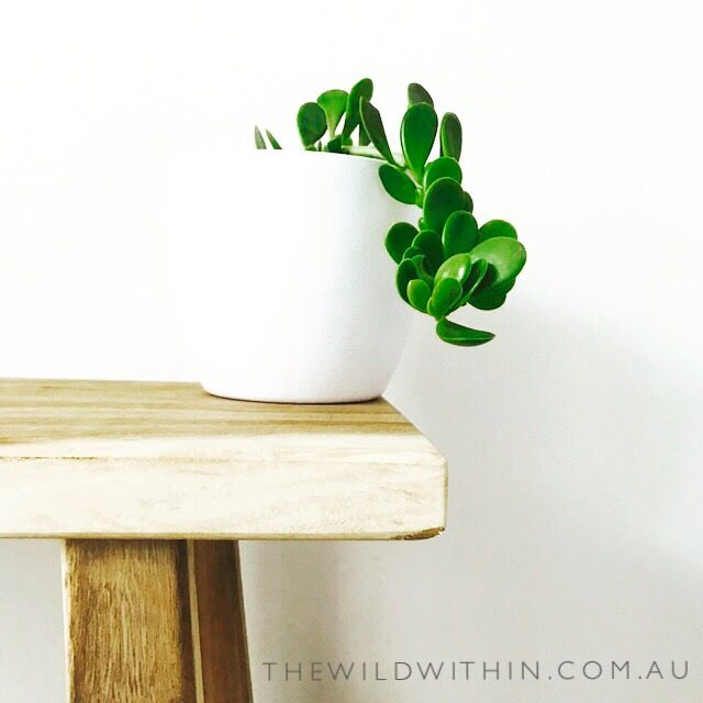 How to care for Indoor plants. 5 Secret tips no one tells you | visit www.thewildwithin.com.au