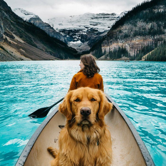@aspenthemountainpupA four-year-old Golden Retriever named Aspen�based in Colorado, naturally�travels around with owner and photographer Hunter Lawrence.