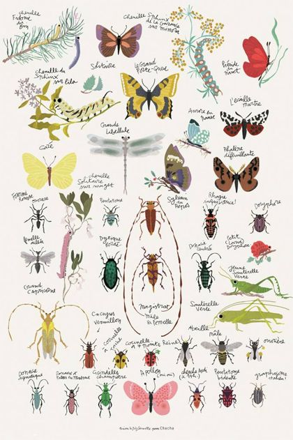 Tuinbeestjes; insectenposter - http://tuinieren.nl #insect #butterfly #poster #illustrations