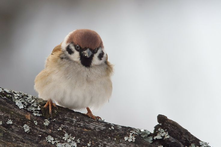 angry bird :-) by Roland Deme on 500px