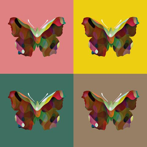 Composition of 4 Butterflies - canvas
