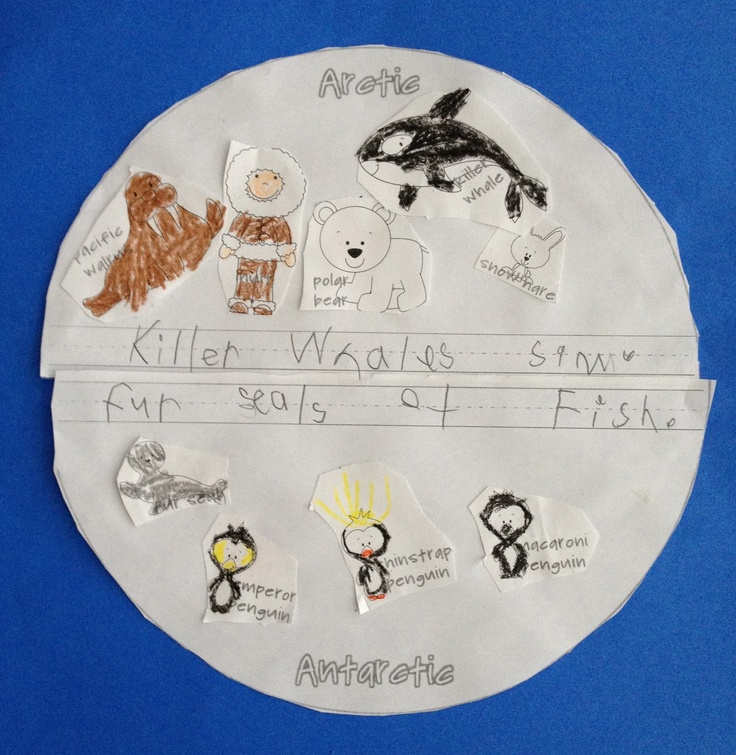 arctic animals vs. antarctic animals.  sort animals & write what you learned.