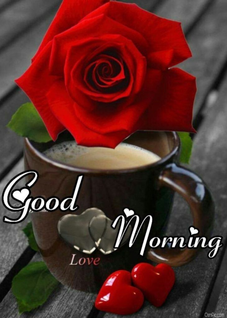 Good morning images with love roses red rose good morning