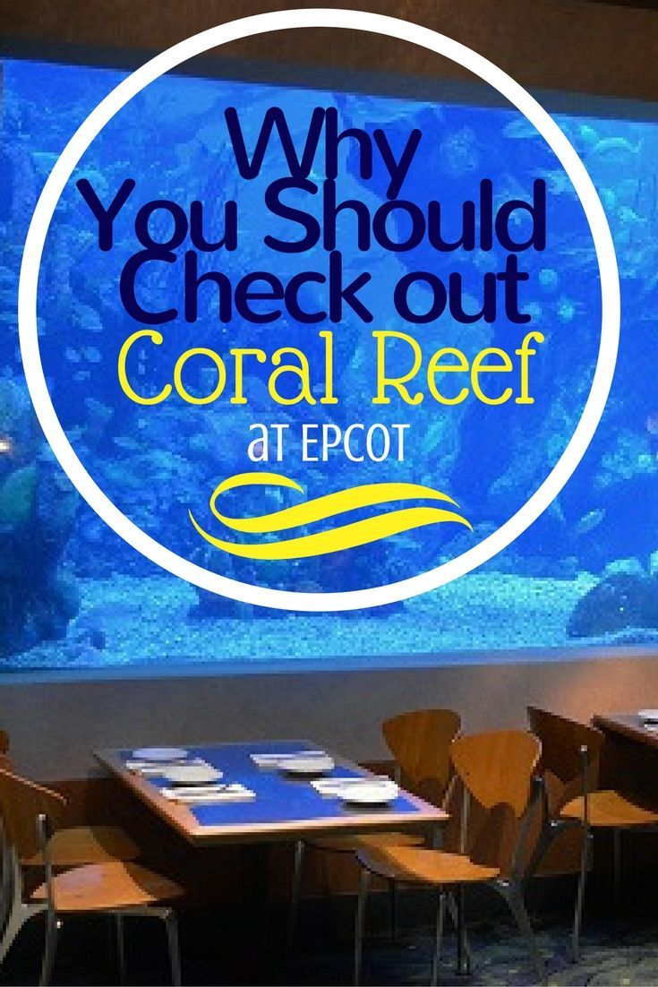 If you haven't tried Coral Reef in Epcot, you are really missing out on a great dining experience.  via @disneyinsider
