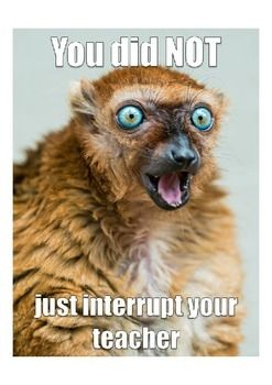 classroom poster, classroom rules and procedures, animal memesA fun little meme to help the teacher!Memes are a fantastic way to get students to follow classroom rules and procedures!Please check out my Classroom Rules and Procedures Animal Memes.Thanks!With Flying Colors