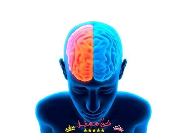 فوائد الكستناء Image Png Brain