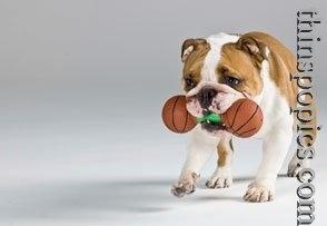 Dog Exercise: How to Exercise Dog Indoors elyse-dog-training-inspiration-tips